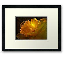 ~ Daffodil ~ Framed Print