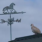 Dove....I'm lost, which way is north......? by Roy  Massicks