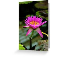 Water lily in pink and yellow Greeting Card