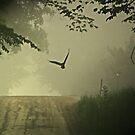 Escape Into the Mist by Geno Rugh