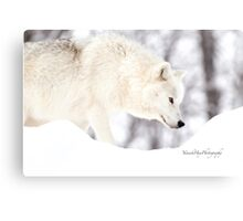 On The Prowl - Arctic Wolf Canvas Print