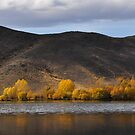 Autumn Gold by Peter Hammer
