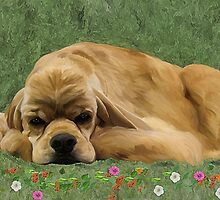 American Cocker spaniel by Cazzie Cathcart