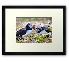 Married Bliss (Atlantic Puffins) Framed Print