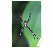 Spider on her Web Poster