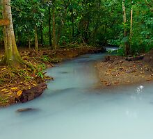 Magical Mayan Jungle River by Zane Paxton