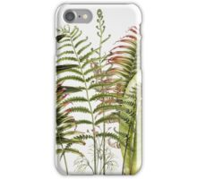 Australian Ferns iPhone Case/Skin