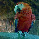 Koko the Parrot by sky   princess