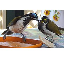 BLUE FACED HONEYEATER Photographic Print