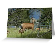 Deer and young Greeting Card