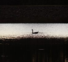 Lone Scout On The Lake by Jean Gregory  Evans