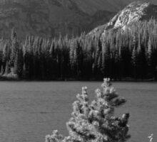Bear Lake Monochrome Sticker
