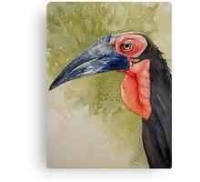 Grouch Ground Hornbill Canvas Print