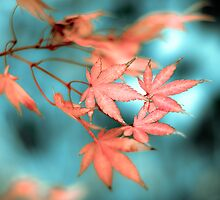 ...the autumn leaves... by Geoffrey Dunn