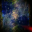 Grass around Swanbank by mewalsh