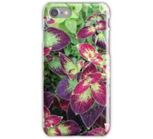 Nature's Color iPhone Case/Skin