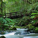 The old log Bridge by Donovan Wilson