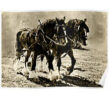 Shire Horses Poster