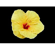 Yellow Hibiscus on Black Photographic Print