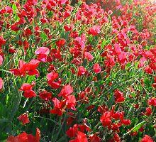 Red Sweet Pea's by Renee D. Miranda