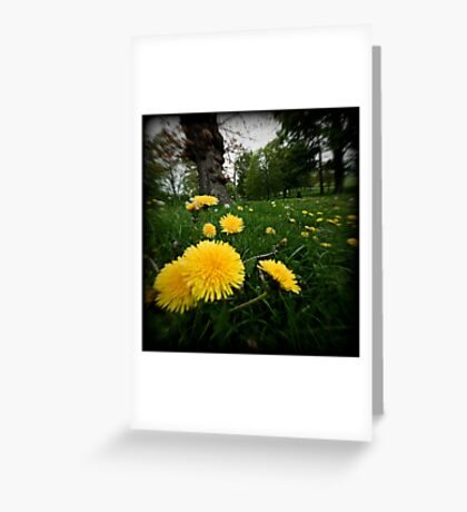 dandelions at stanmer park brighton sussex Greeting Card