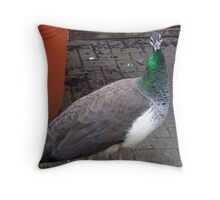 Peacock at Upton Park Throw Pillow