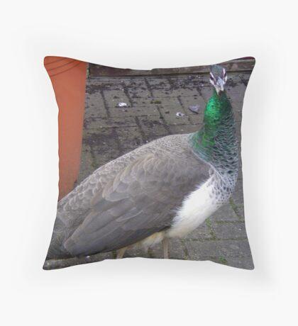 Peacock at Upton Park Throw Pillow
