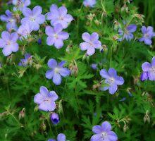 Pretty Little Flowers by kkphoto1