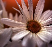 Daisy Bouquet on Gold in the Rain by Jay Gross