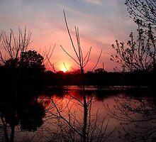 As Nature Sleeps...© by Dawn M. Becker