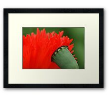 interview of a poppy Framed Print