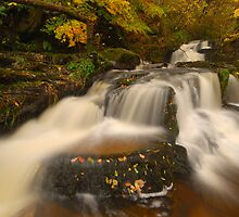 Black Spout Wood, Pitlochry, Perthshire, Scotland by James Paul