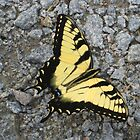 Yellow Butterfly on the Rocks by Jay Gross