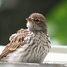 Baby Sparrow by swaby