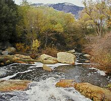 Rivers Run Through It - Sequoia National Forest by Cupertino