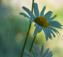 Daisy by George Swann