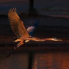 1227092 Great Blue Heron by Marvin Collins