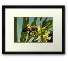 270 Bumble Bee Framed Print