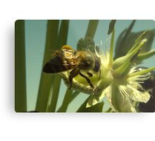270 Bumble Bee Metal Print