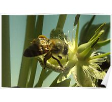 270 Bumble Bee Poster