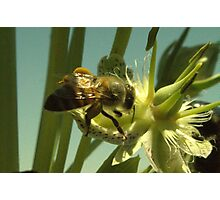 270 Bumble Bee Photographic Print