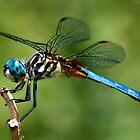 Dragonfly by Jane Brack