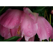 peony blush Photographic Print