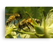271 Bumble Bees Canvas Print