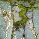 Groomsport Seaweed on Rock by 23kurtz