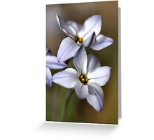 Star White with shades Greeting Card