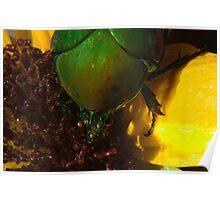 272 Green Shield Stink Bug Poster