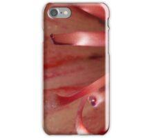 273 Red Iris iPhone Case/Skin