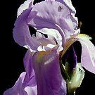 feeling purple by Brian Bo Mei