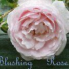 Blushing Rose by Bea Godbee